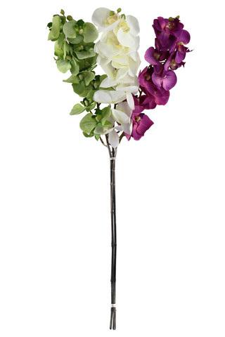 Orchid Phalaenopsis flowering stem hot pink 4087