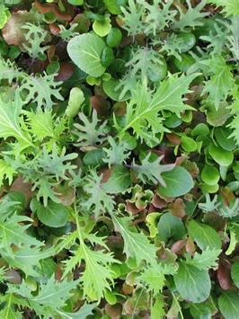 Organic Baby Mesclun Salad Leaves - 100g approx