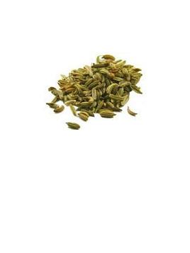 Organic Fennel Seed - 10g