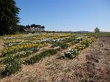 Paddock view mid spring 2014