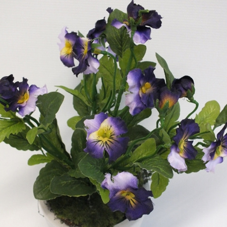 Pansy Potted 2225