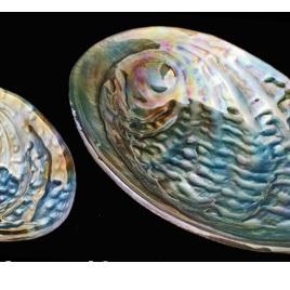 Paua Bowl