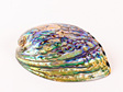 Paua Shell Supreme Lacquer Coated