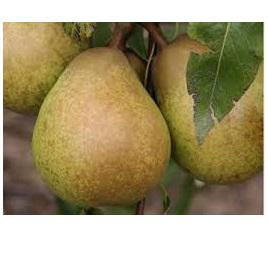 Pears Eating Biogro Certified Organic 1kg