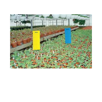 Pest Traps Blue 10 x 25cm 10 per pack