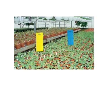 Pest Traps Blue 10 x 25cm 10 per pack