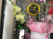 Phalaenopis Orchid Plant