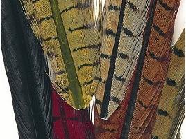 Pheasant Tail Pairs