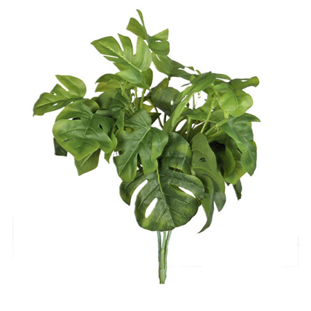 Philodendrum bush 4173