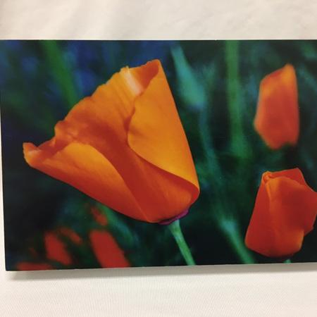 Photo Block - Poppy in Cambourne - 6 x 4