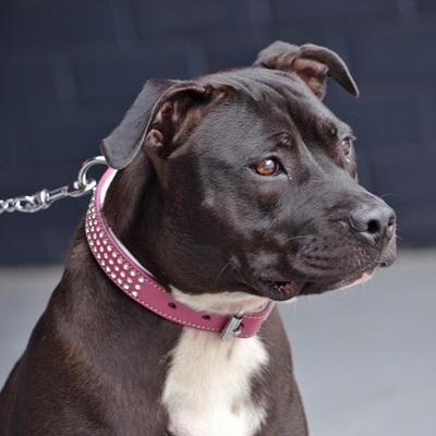Rogue Royalty Shimmer Swarovski Pink Collar