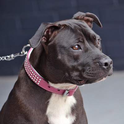 Rogue Royalty Shimmer Swarovski Pink Collar