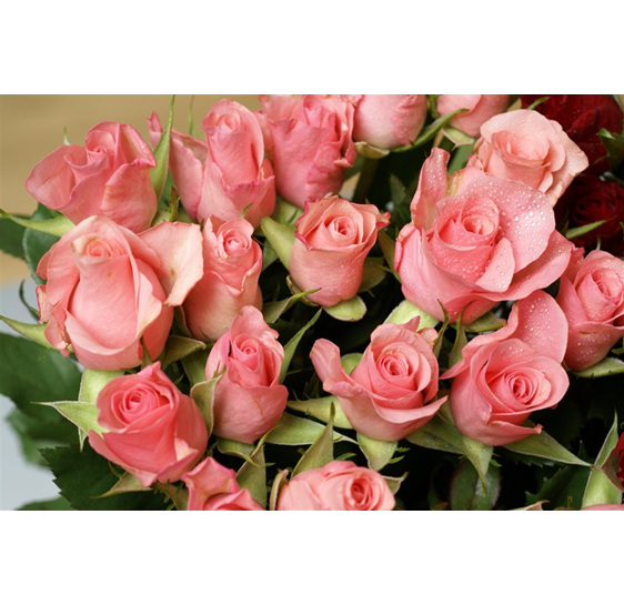pink rose vox bouquet