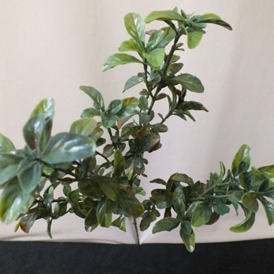 Pittosporum spray 1421