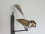 Piwakawaka/ Fantail Wall Birds