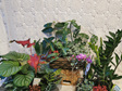 Plant Lover Hamper 4 Plants