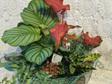 Plant Lover Hamper 5 Plants