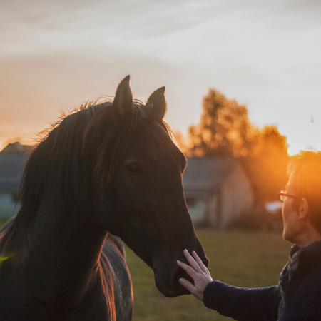 Pleasure and Performance Horses
