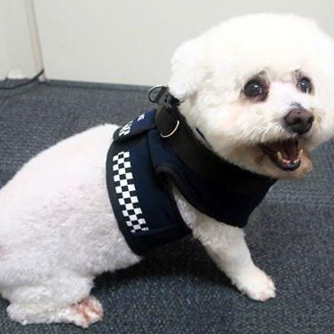 Police Dog Coat