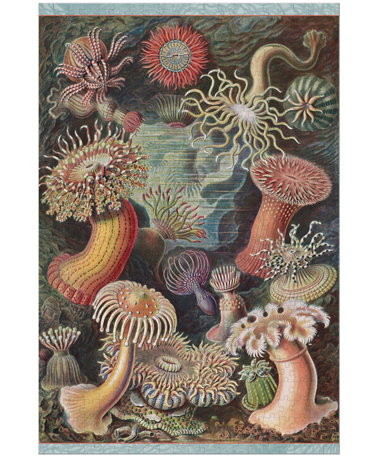 Pomegranate 500 piece jigsaw puzzle  Sea Anemones buy at www.puzzlesnz.co.nz