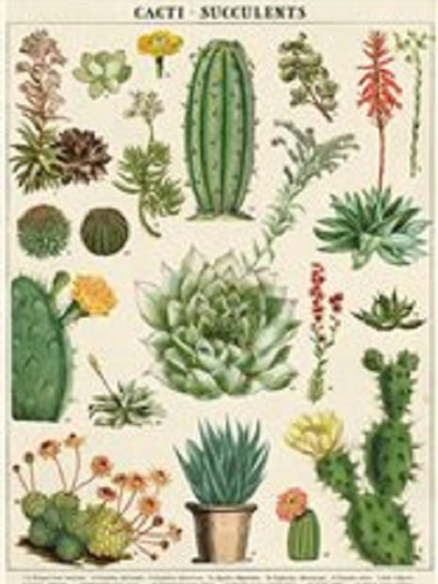 Poster or Gift Wrap - Succulents