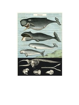Poster or Gift Wrap - Whales