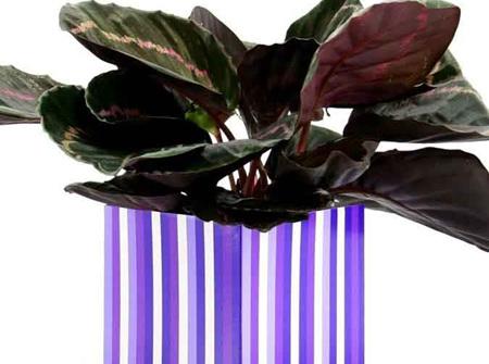Posy box - purple stripes