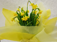 Potted Daffodil