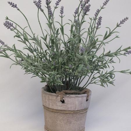 Potted Lavender 2170