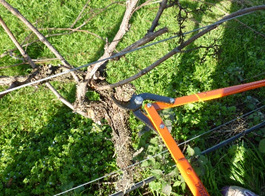 pruning loppers, horticulture pruning loppers, forestry loppers, tree pruning