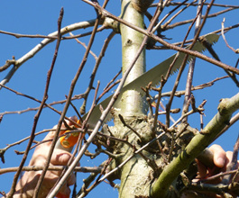 Pruning saws for forestry pruning, horticultural pruning and garden pruning