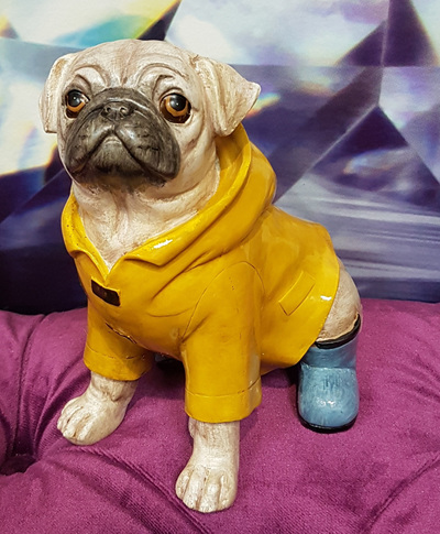 Pug in Yellow Raincoat