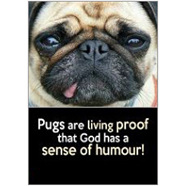 Pugs Fridge Magnet