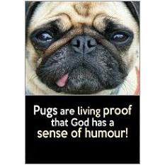 Pugs Fridge Magnet