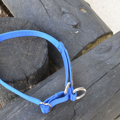 Puppy / Small Limited Slip Collar