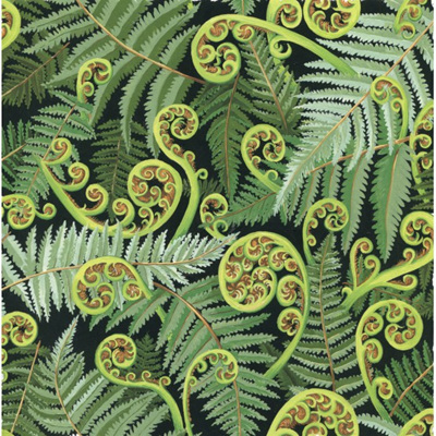 Quilt Backs 274cm - Koru Frond