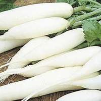 Radish White Icicle Certified Organic Per Bunch