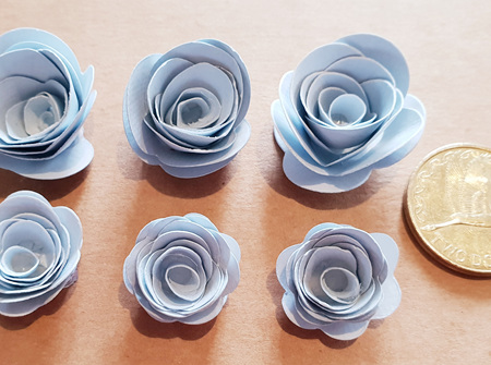 Rain mini roses
