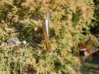 Raupo/ Bulrush Garden Wands
