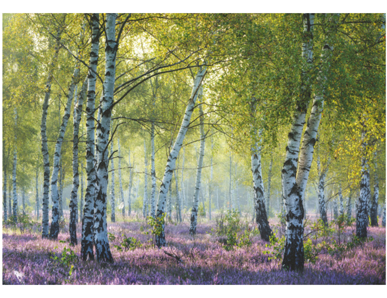 Ravensburger 1000 piece  puzzle  Birch Forest  buy at www.puzlesnz.co.nz