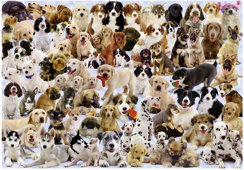 Ravensburger 1000 Piece Jigsaw Puzzle: Dogs Galore
