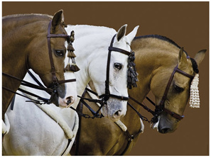 Ravensburger 1500 Piece  Jigsaw Puzzle: Elegant Horses