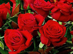 red roses for valentines