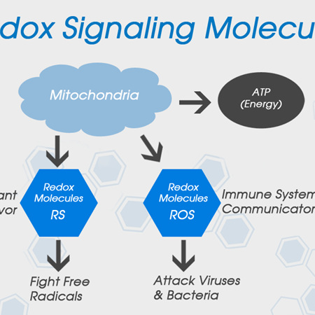 Redox Signalling Molecules Beverage - 946ml