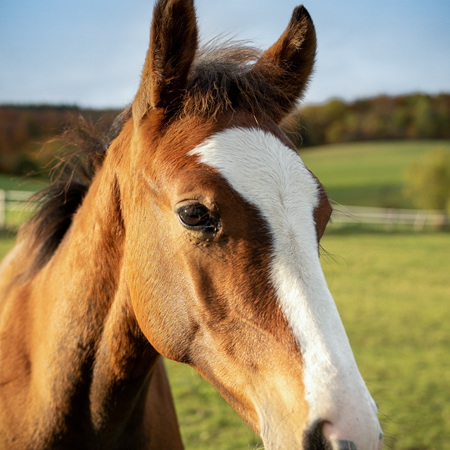 Reproduction & Foaling Services