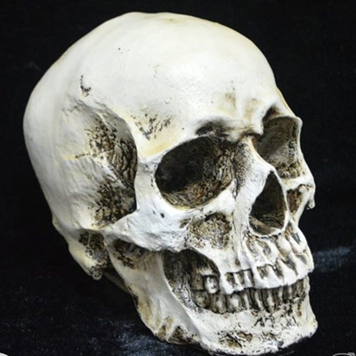 Lifesize Resin Skull