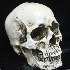resin-skull-hire-horror