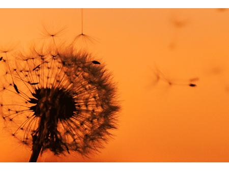 Respiratory & Allergies
