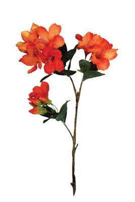 Rhododendron  spray 1383