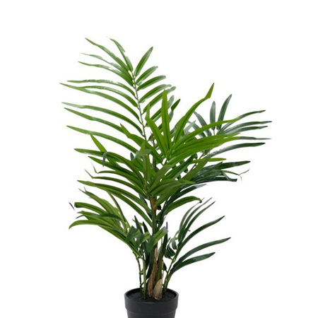 Robellini Palm 4453